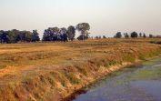 Verdörrtes Gras und das Wäldchen auf der Sauerländer Hutweide