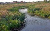 Der träge Entwässerungskanal auf der Sauerländer Hutweide