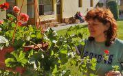 Sieglinde, die langjährige Mitarbeiterin in der Sozialstation des Forums, kümmert sich um die Geranien in der Gartenlaube