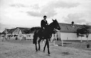 15.05.1944 Liebling: Junge zu Pferde