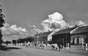 17.05.1944 Lovrin: Dorfstraße mit Kuhherde